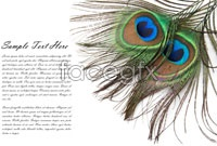 Link toHd feather card design pictures