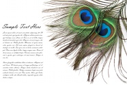 Link toHd feather card picture download