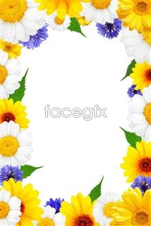 Link toHd flower border pictures