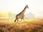 Link toHd giraffe psd
