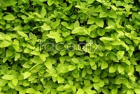 Link toHd green leaf picture