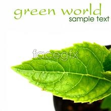 Link toHd green leaf plants pictures