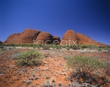 Link toHd landscape desert plants pictures