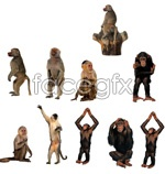 Link toHd monkey images psd