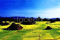 Link toHd paddy field landscape on the outskirts the picture