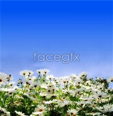 Link toHd pictures of beautiful chrysanthemums