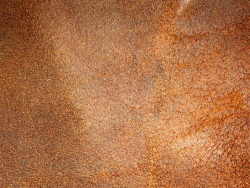 Link toHd pictures-orange background color series 7