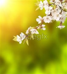 Link topictures background plum Hd