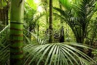Link toHd primeval forest landscape pictures