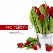 Link toHd red tulip flower pictures