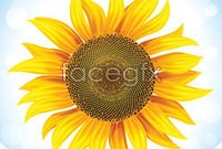 Link toHd sunflower vector