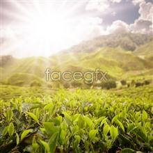 Link topicture idyllic sunny Hd