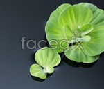 Link toHd water plants psd