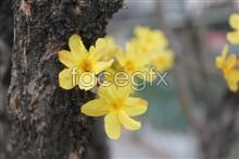 Link toHd winter jasmine pictures