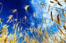 Link toHigh definition pictures of dog's tail grass