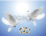 Link toHold of the ring dove vector
