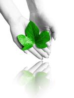 Link toHolding the leaf psd