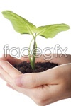Link toHolding the plant seedling psd