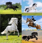 Link toHorse hd pictures psd