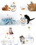 Link toHouse cat and goldfish psd