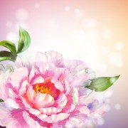 Link toHuge collection of beautiful flower vector graphics 05 free