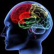 Link toHuman brain image download
