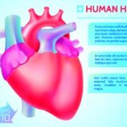 Link toHuman heart medical vector graphics 01 free