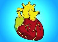 Human heart vector free