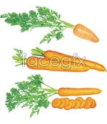 Link toHyper-realistic carrot vector