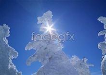 246 Ice,