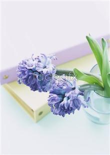 Link toIndoor flower 119