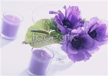Link toIndoor flower 124
