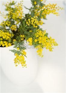 Link to33 flower Indoor