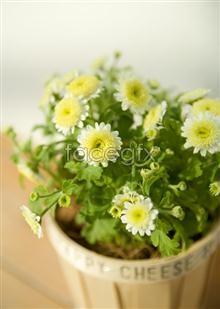 Link to65 flower Indoor