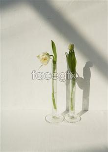 Link toIndoor flower 68