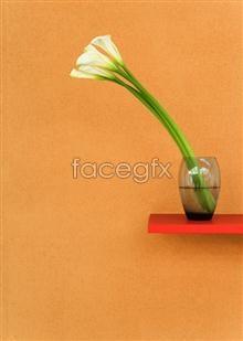 Link toIndoor flower 80