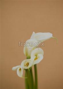 Link toIndoor flower 81