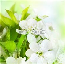 Link toJasmine photography pictures