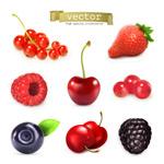 Juicy fruit-vector