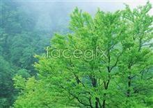 Link to200 beauty Jungle