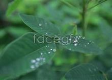 Link toJungle beauty of 236