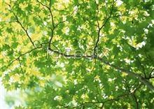 Link toJungle beauty of 314