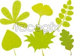 Link toKind of leaf shape 01 vector