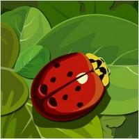 Ladybugs on the green leaf
