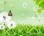 Lawn dandelions butterflies bubble psd