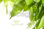 Link toLeaves close-up hd psd