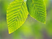 Link topicture close-up Leaves