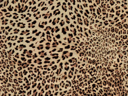 Link toLeopard cashmere fabric hd pictures-6