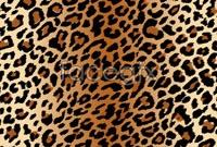 Link toLeopard vector background