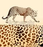 Link toLeopard vector material